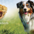 TEXAMERICAS CENTER RETAINS PET FOOD ADDITIVE COMPANY